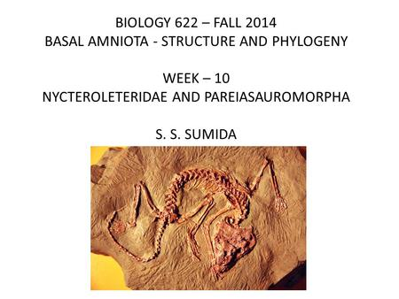 BIOLOGY 622 – FALL 2014 BASAL AMNIOTA - STRUCTURE AND PHYLOGENY WEEK – 10 NYCTEROLETERIDAE AND PAREIASAUROMORPHA S. S. SUMIDA.