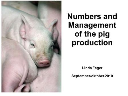 Numbers and Management of the pig production Linda Fager September/oktober 2010.