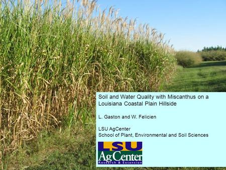 Soil and Water Quality with Miscanthus on a Louisiana Coastal Plain Hillside L. Gaston and W. Felicien LSU AgCenter School of Plant, Environmental and.