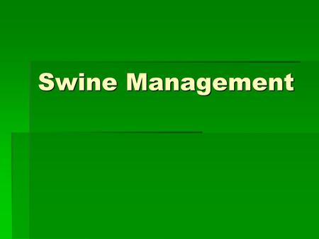 Swine Management. Characteristics of swine  Pigs are Homeotherms  Maintain a constant body temperature  Pigs are Monogastrics  Pigs have very few.