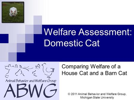 Welfare Assessment: Domestic Cat Comparing Welfare of a House Cat and a Barn Cat © 2011 Animal Behavior and Welfare Group, Michigan State University.