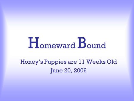 H omeward B ound Honey's Puppies are 11 Weeks Old June 20, 2006.