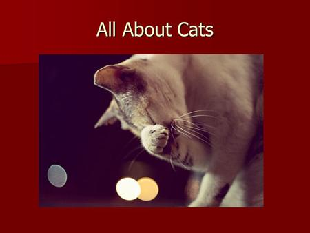 All About Cats. 2 1 8 7 6 5 4 3 10 9 11 Symptoms of Stress in Cats.