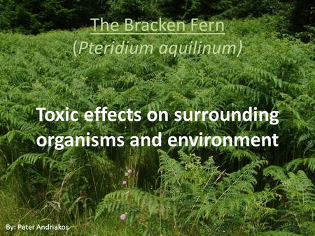 The Bracken Fern (Pteridium aquilinum) Toxic effects on surrounding organisms and environment By: Peter Andriakos.