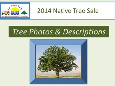 2014 Native Tree Sale Tree Photos & Descriptions.