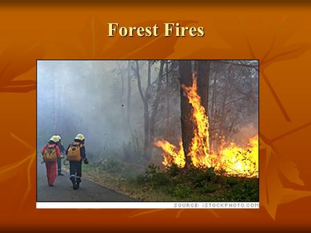 Forest Fires. Surface Fire Burns undergrowth and leaf litter Burns undergrowth and leaf litter.