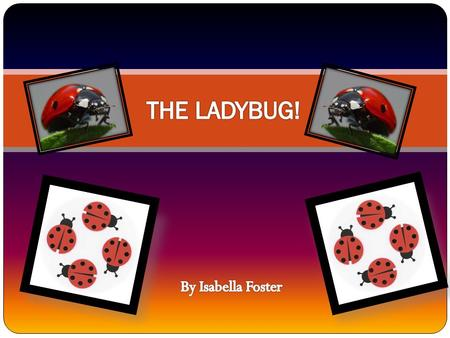 About ME! There 5,000 different species of ladybugs in the world. A ladybugs wings bat together 85 times per second while there are flying. The ladybug.