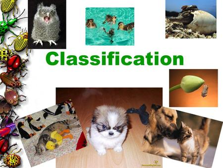 Classification.