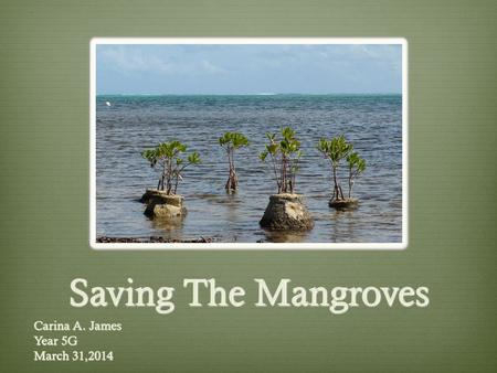 Saving The Mangroves Carina A. James Year 5G March 31,2014.