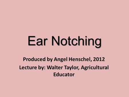 Ear Notching Produced by Angel Henschel, 2012 Lecture by: Walter Taylor, Agricultural Educator.