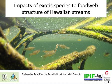 Impacts of exotic species to foodweb structure of Hawaiian streams Richard A. MacKenzie, Tara Holitzki, Karla McDermid.