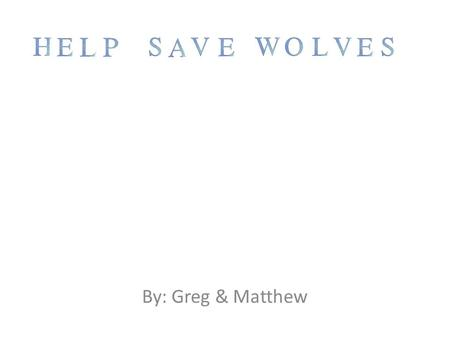 By: Greg & Matthew Conflict with wolves Since wolf habitats are still being destroyed wolves can't find enough food to eat. Instead they will have to.