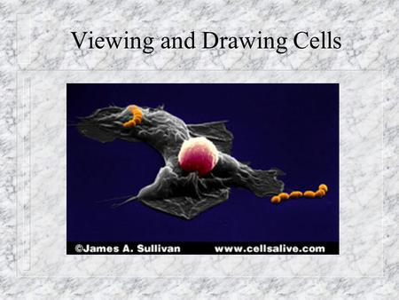 Viewing and Drawing Cells. In this lesson you will: n learn to focus a microscope n learn how to properly label a drawing n learn to calculate magnification.