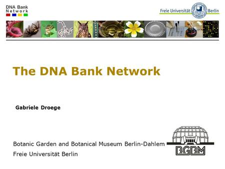 The DNA Bank Network Gabriele Droege Botanic Garden and Botanical Museum Berlin-Dahlem Freie Universität Berlin.