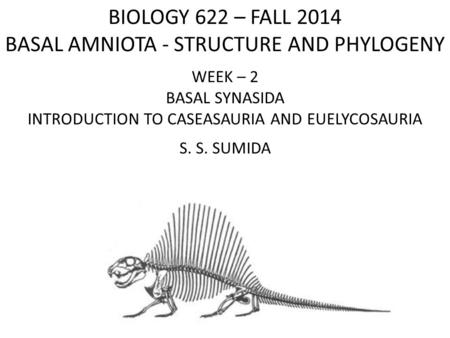 BIOLOGY 622 – FALL 2014 BASAL AMNIOTA - STRUCTURE AND PHYLOGENY WEEK – 2 BASAL SYNASIDA INTRODUCTION TO CASEASAURIA AND EUELYCOSAURIA S. S. SUMIDA.