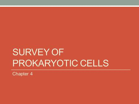 SURVEY OF PROKARYOTIC CELLS Chapter 4. TYPICAL PROKARYOTIC CELL.
