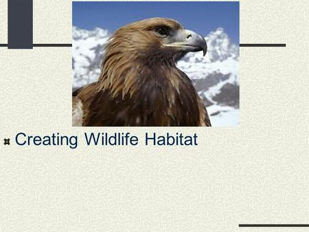 Creating Wildlife Habitat. Next Generation Science/Common Core Standards Addressed HS ‐ LS2 ‐ 7. Design, evaluate, and refine a solution for reducing.