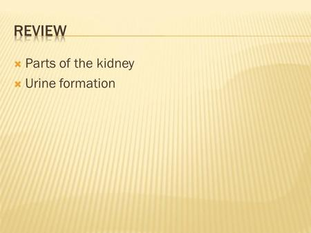  Parts of the kidney  Urine formation.  Why is urine more concentrated then other times?  Due to reabsorption of water.