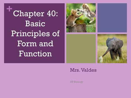 Chapter 40: Basic Principles of Form and Function