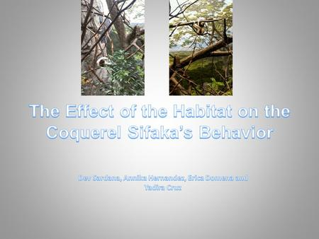 Which quadrant of the habitat would the Coquerel Sifaka perform the most diverse activities?
