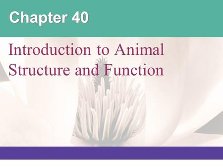 Introduction to Animal Structure and Function