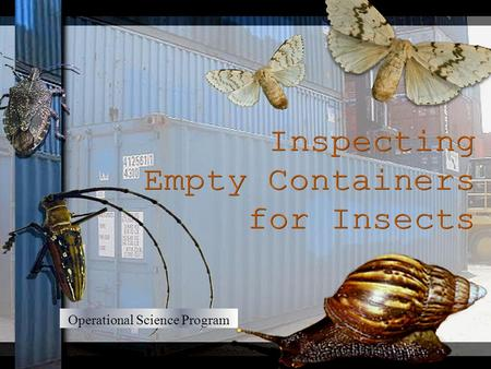 Operational Science Program. This presentation will outline: Main insect pests likely to be encountered when inspecting shipping containers Pests of Quarantine.