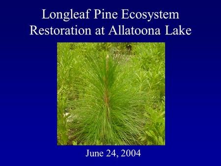 Longleaf Pine Ecosystem Restoration at Allatoona Lake June 24, 2004.