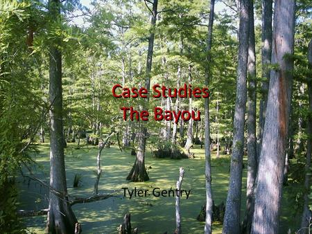 Tyler Gentry Case Studies The Bayou. Bayou A bayou is a small, slow-moving stream or creek, or a lake or pool (bayou lake) that lies in an abandoned channel.