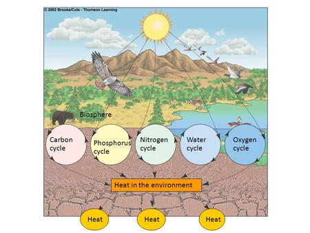 Biosphere Carbon cycle Nitrogen cycle Water cycle Oxygen cycle