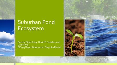 Suburban Pond Ecosystem Beverly (Star) Jossy, David F. Nebeker, and Daniel Wal BIO315/Team A/Instructor: Olayinka Mintah.