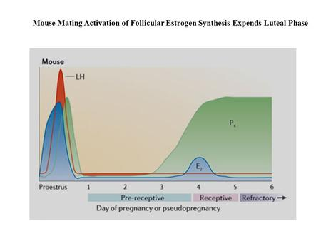 Mouse Mating Activation of Follicular Estrogen Synthesis Expends Luteal Phase.