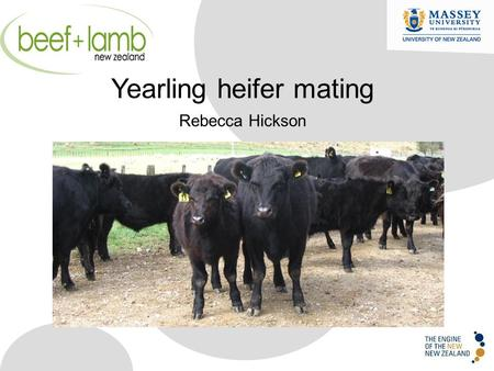 Yearling heifer mating Rebecca Hickson. Profitability of calving heifers Beef cow efficiency Why calve heifers Why not calve heifers Performance of heifers.