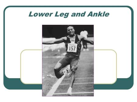 Lower Leg and Ankle. Walking Gait Stance Phase Heel-strike Midstance Toe-off Swing Phase.