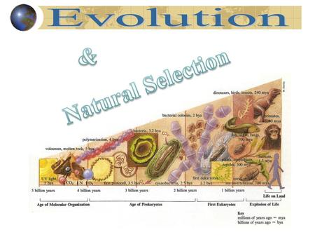 Vocab Evolution - change in a kind of organism over time; process by which modern organisms have descended from ancient organisms Theory - well-tested.
