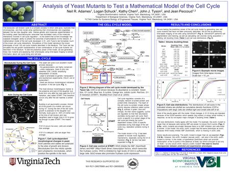 Analysis of Yeast Mutants to Test a Mathematical Model of the Cell Cycle Neil R. Adames 1, Logan Schuck 1, Kathy Chen 2, John J. Tyson 2, and Jean Peccoud.