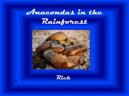 Anacondas in the Rainforest