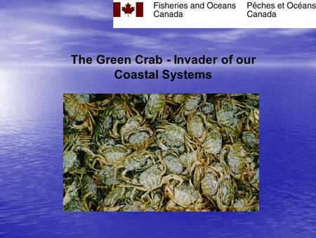 The Green Crab - Invader of our Coastal Systems THE GREEN CRAB (Carcinus maenas) An aquatic invader.