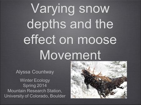 Varying snow depths and the effect on moose Movement Alyssa Countway Winter Ecology Spring 2014 Mountain Research Station, University of Colorado, Boulder.