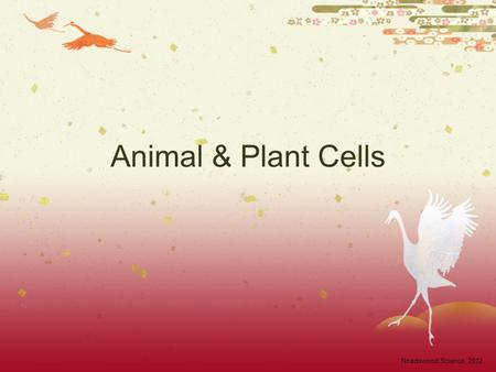 Animal & Plant Cells Noadswood Science, 2012. Animal & Plant Cells  To know the structure of animal and plant cells, and the function of each part Sunday,