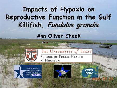 Impacts of Hypoxia on Reproductive Function in the Gulf Killifish, Fundulus grandis Ann Oliver Cheek.