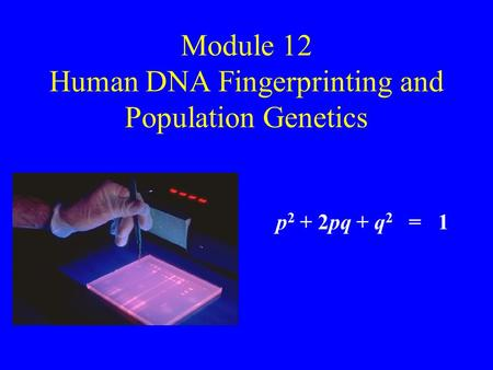 Module 12 Human DNA Fingerprinting and Population Genetics p 2 + 2pq + q 2 = 1.