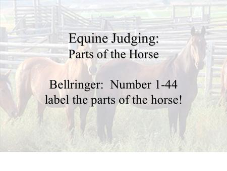 Equine Judging: Parts of the Horse Bellringer: Number 1-44 label the parts of the horse!
