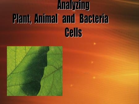 Plants, Animal and Bacteria cells Indicator - KCKS 10SC060302 : Distinguish cellular structures and their function in plants, animals and bacteria. (