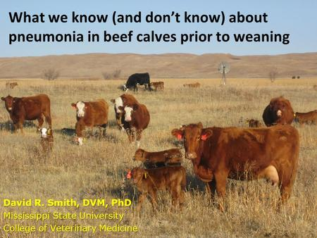 What we know (and don't know) about pneumonia in beef calves prior to weaning David R. Smith, DVM, PhD Mississippi State University College of Veterinary.