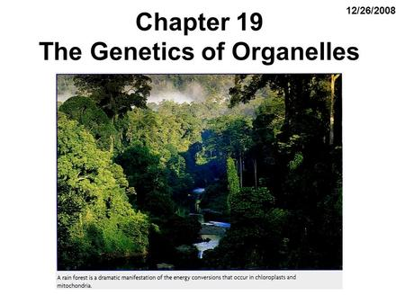Chapter 19 The Genetics of Organelles 12/26/2008.