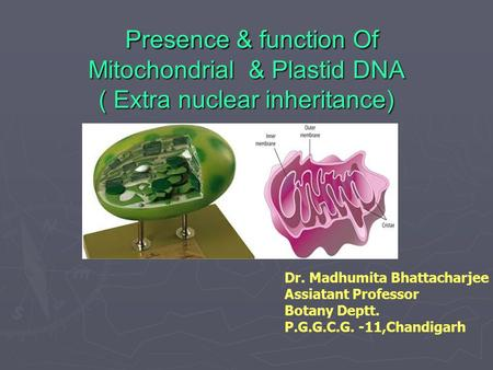 Presence & function Of Mitochondrial & Plastid DNA ( Extra nuclear inheritance) Presence & function Of Mitochondrial & Plastid DNA ( Extra nuclear inheritance)