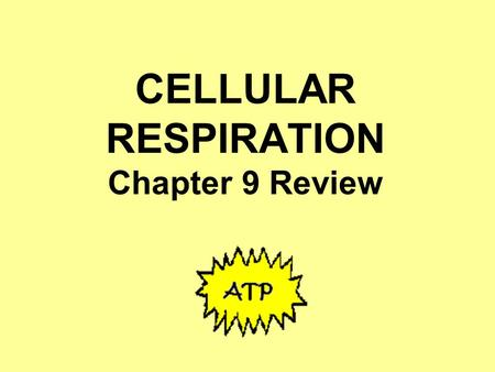 CELLULAR RESPIRATION Chapter 9 Review. In which of these organisms would you expect to find cellular respiration happening? All of them; all living things.