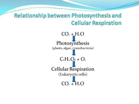 CO 2 + H 2 O Photosynthesis (plants, algae, cyanobacteria) C 6 H 12 O 6 + O 2 Cellular Respiration (Eukaryotic cells) CO 2 + H 2 O.