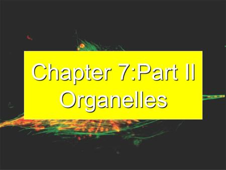 Chapter 7:Part Il Organelles Big Idea The eukaryotic cell contains organelles that allow the specialization and the separation of functions within the.