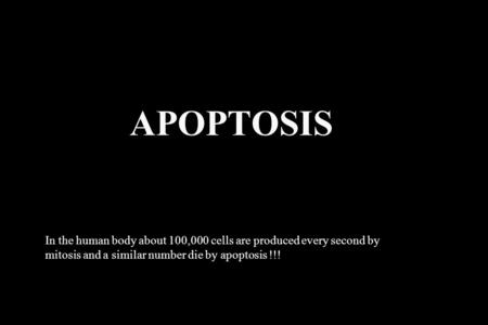 APOPTOSIS In the human body about 100,000 cells are produced every second by mitosis and a similar number die by apoptosis !!!
